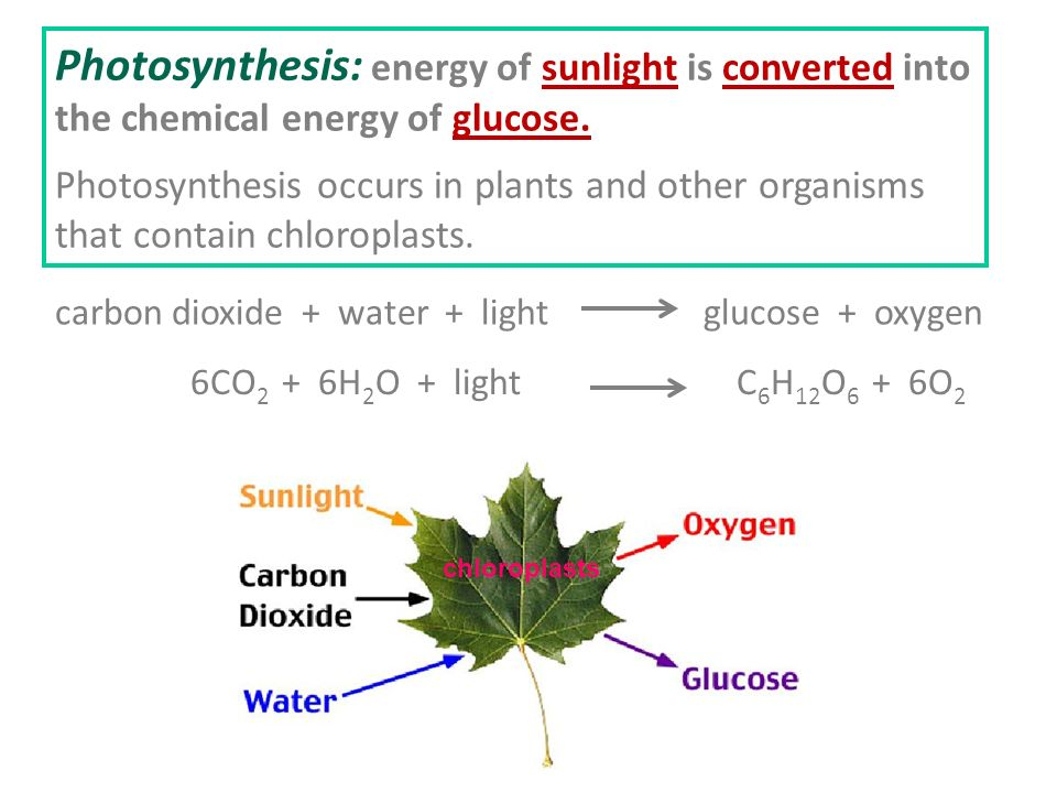 Photosynthesis And Cellular Respiration Ppt Video Online