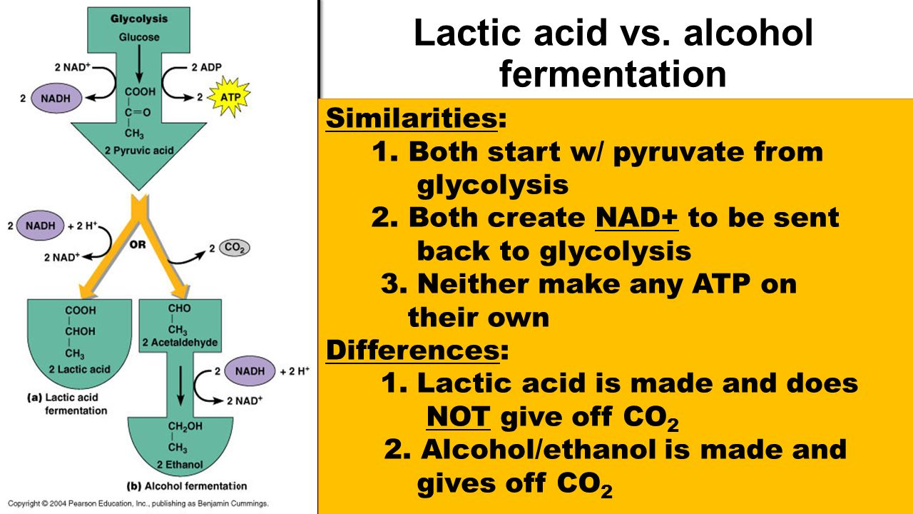ATP and Cellular Respiration: Energy From Food - ppt video ...