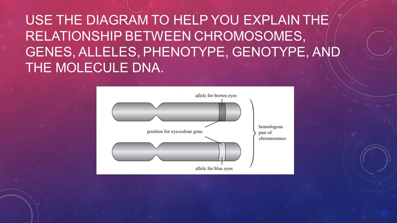 relationship between dna genes chromosomes and genotype