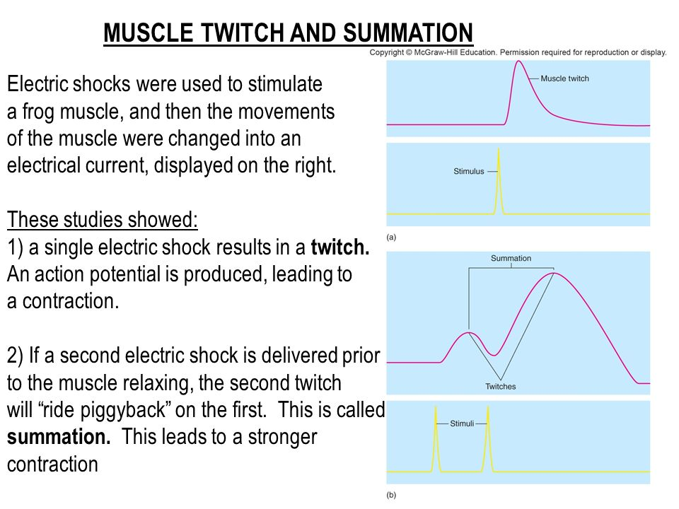 powerphys activity 2 twitch contractions and summation Powerphys 3 - laboratory report(click on the save a copy powerphys #3 chamberlain laboratory report activity 2: twitch contractions and summation name.