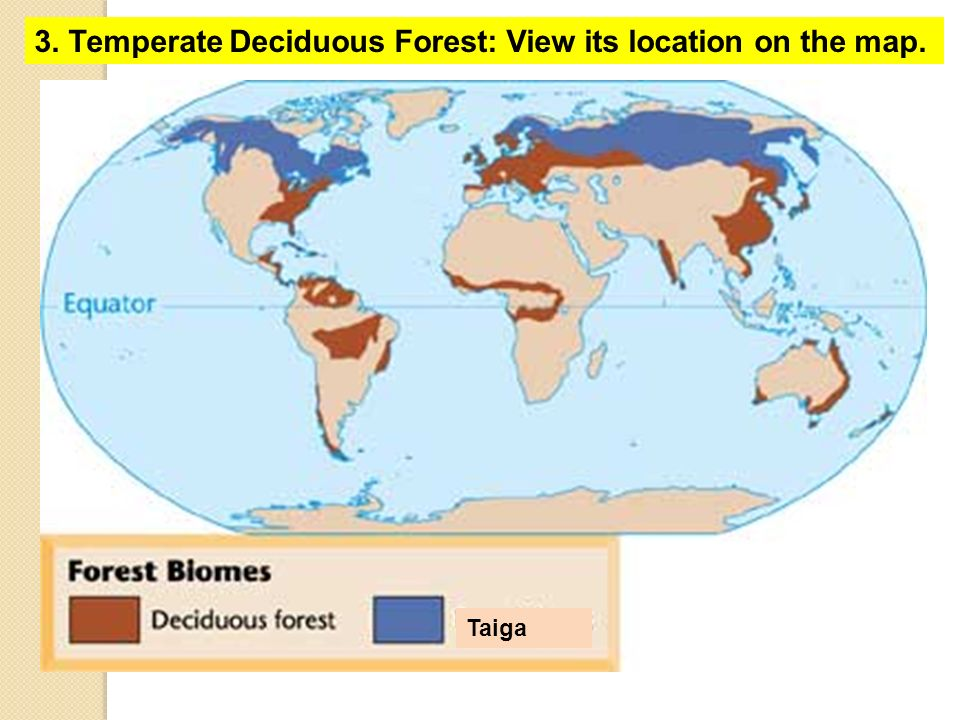 Biomes Foldable Click HERE To See A Video On How To Set This Up - Biomes of the us map
