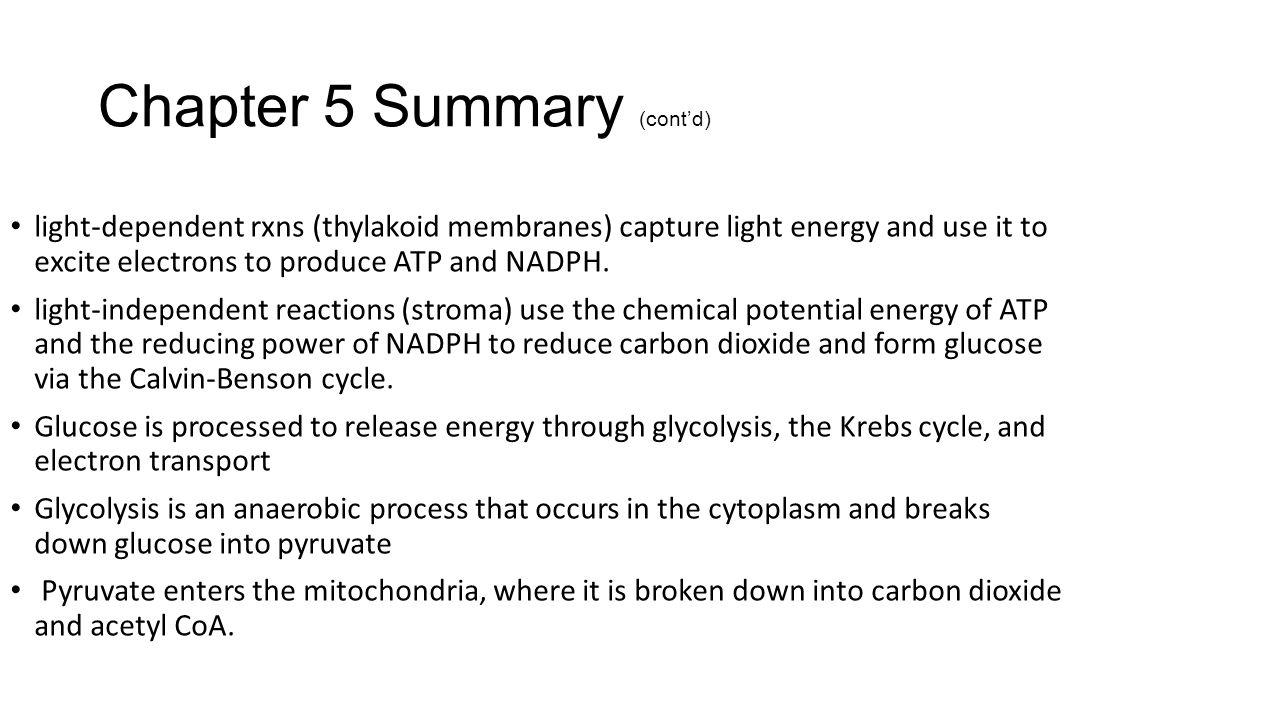 Cellular Respiration. - ppt download