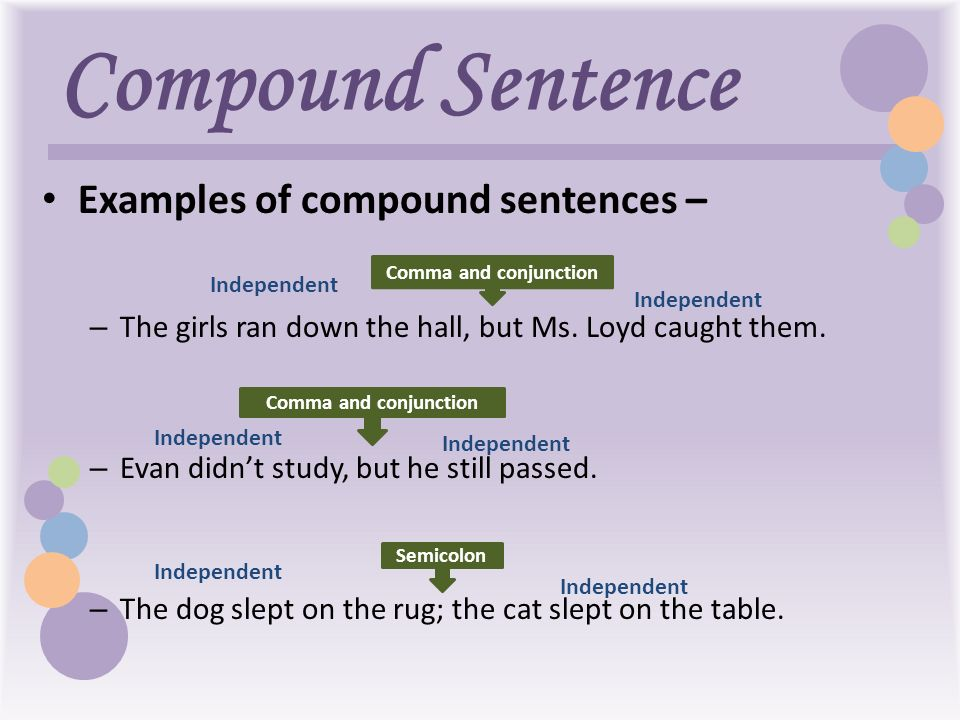 sentence template 28 images binomials with images to