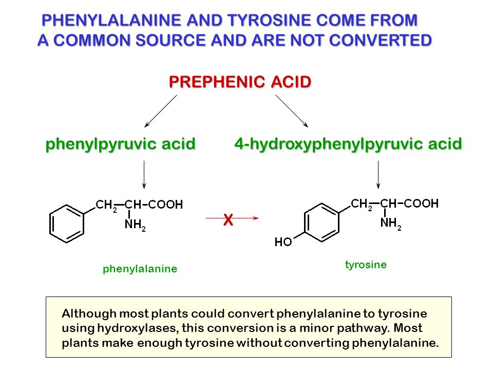 PHENYLALANINE AND TYROSINE COME FROM