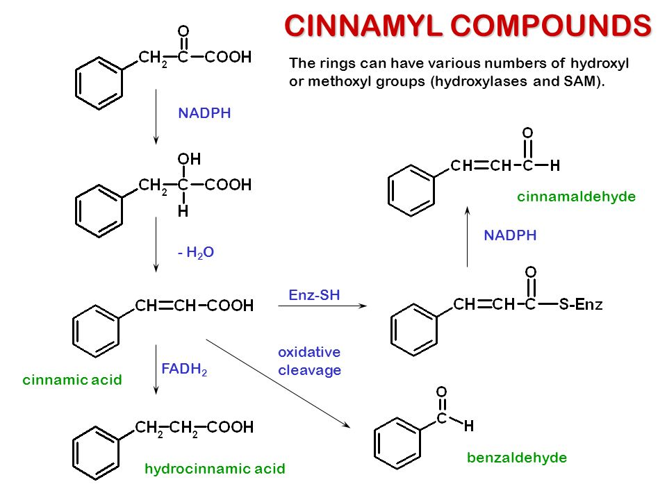 CINNAMYL COMPOUNDS The rings can have various numbers of hydroxyl