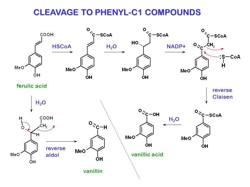 CLEAVAGE TO PHENYL-C1 COMPOUNDS