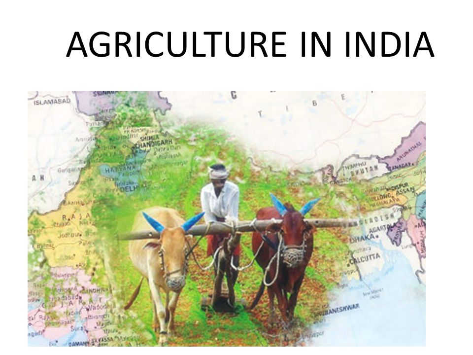 Agriculture in india ppt video online download for Gardening tools online in india