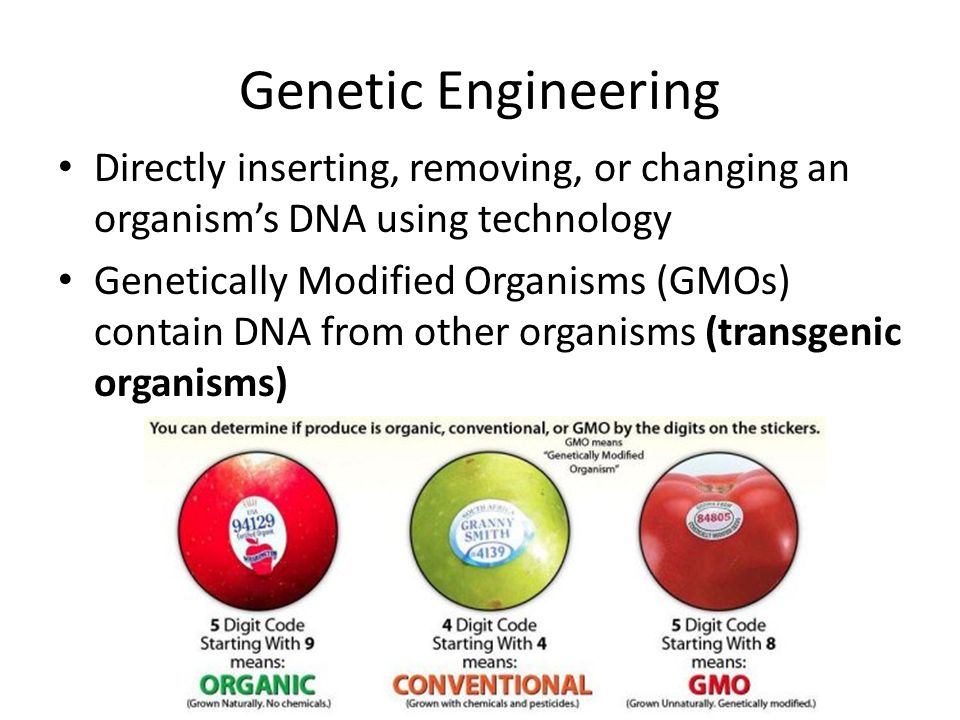 Food For Thought: The Difference Between GMO And GE Foods