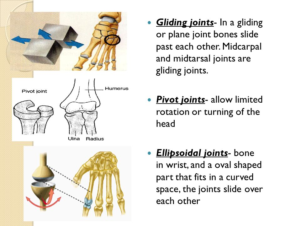 Pictures of Gliding Joint Wrist - kidskunst.info