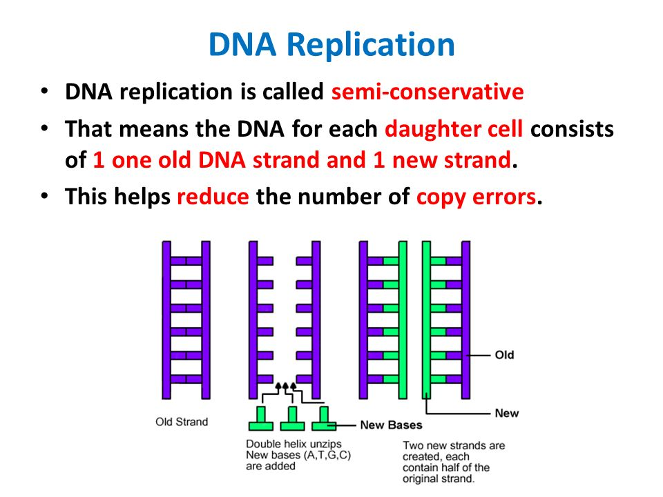 18 dna structure and replication worksheet answers