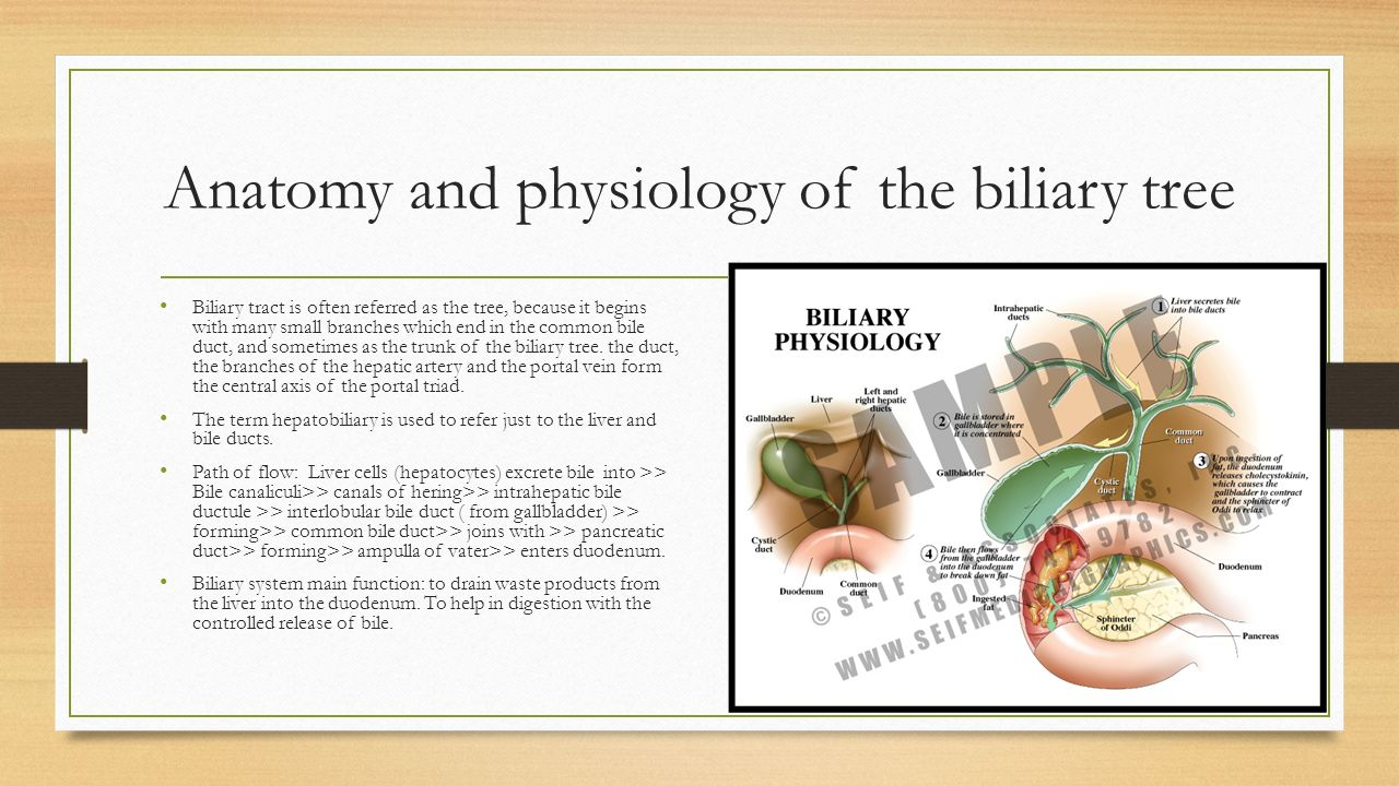 Anatomy of liver and biliary system