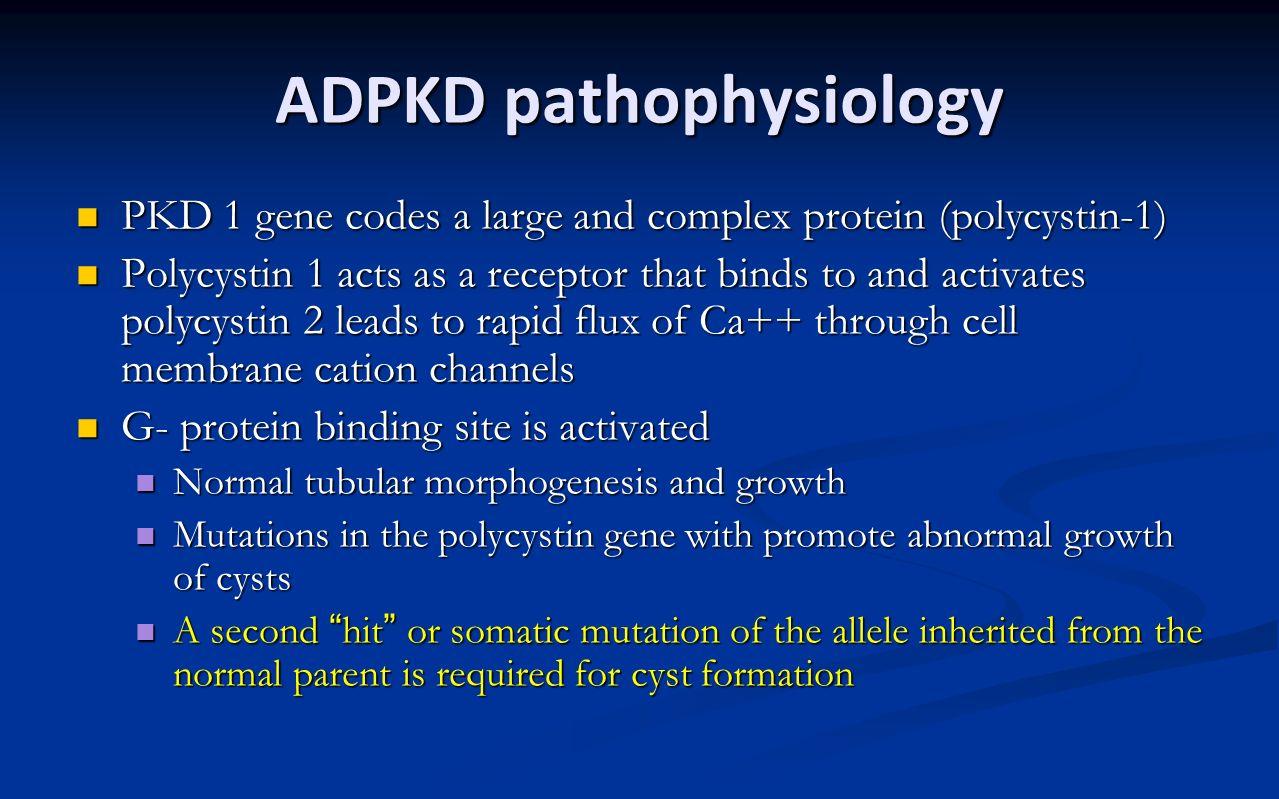 ADPKD pathophysiology