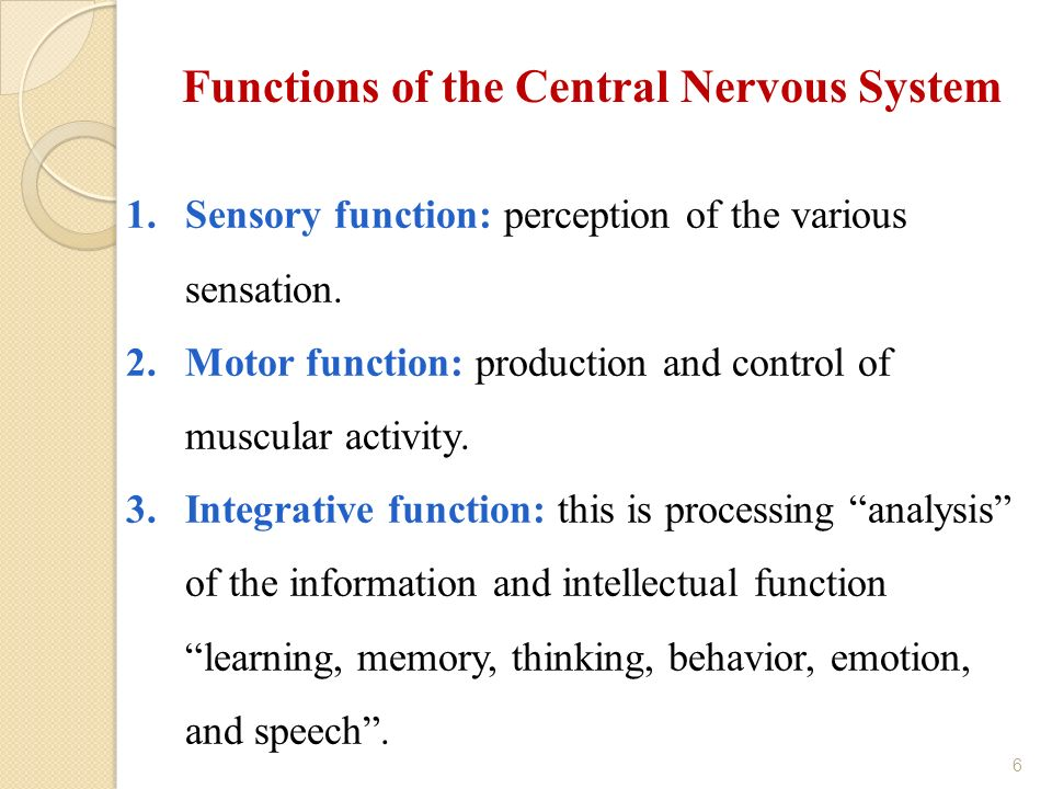 the role of the central nervous system Start studying chapter 23 nervous system learn vocabulary, terms, and more with flashcards, games, and other study tools.