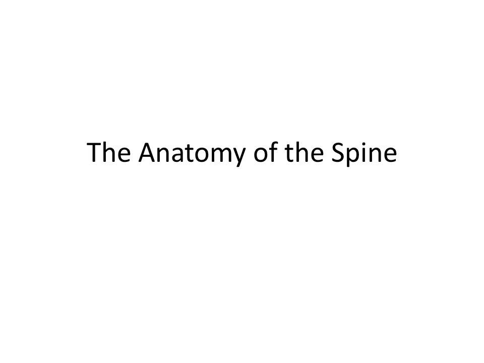 The Anatomy Of The Spine Ppt Video Online Download