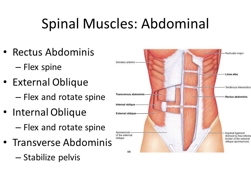 The Anatomy of the Spine