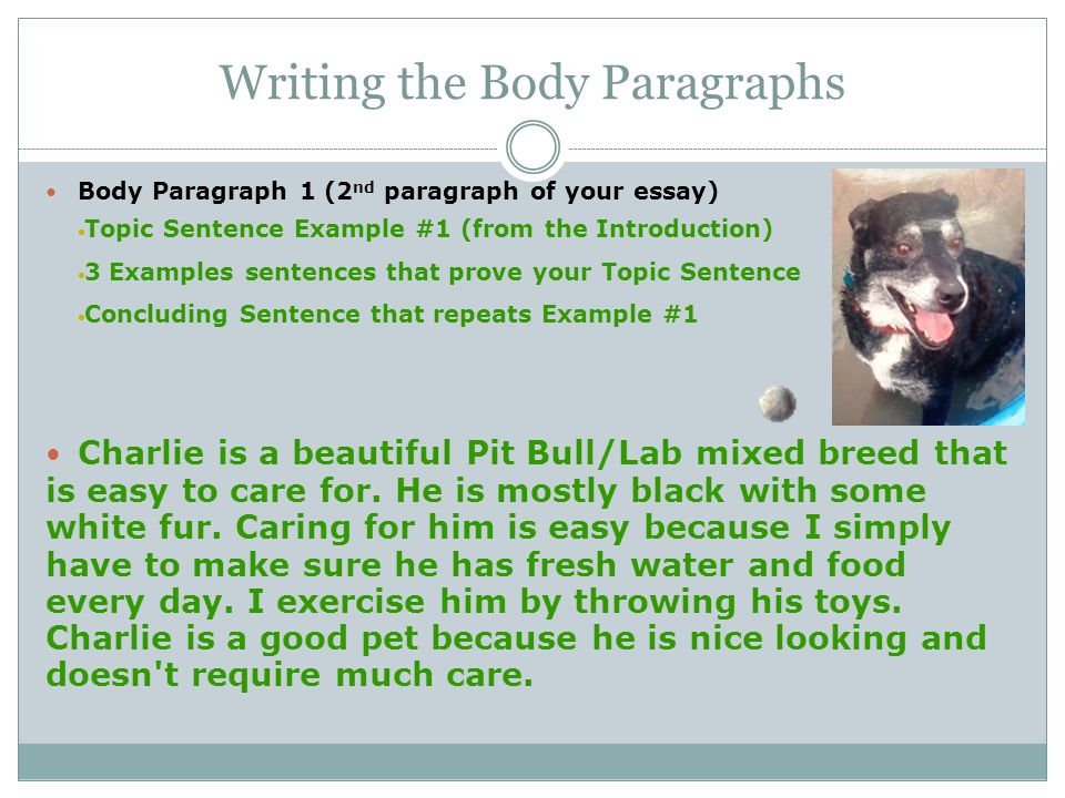 Writing body paragraphs essay