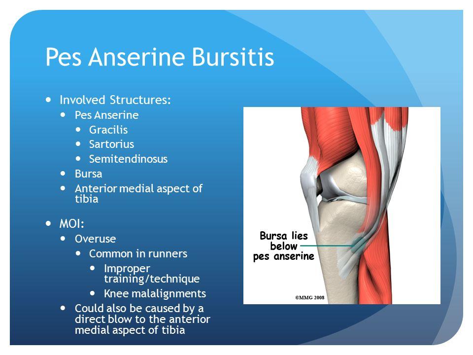 Knee Injuries. - ppt video online download