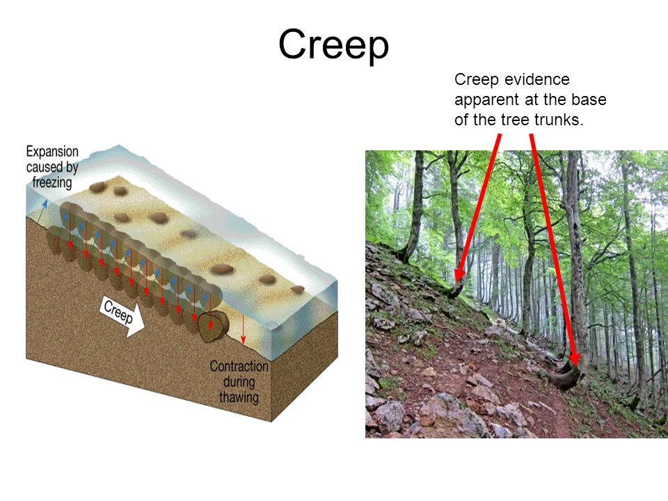 Creep Creep evidence apparent at the base of the tree trunks.