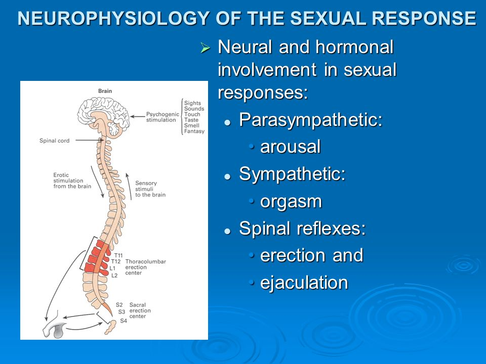 Sympathetic parasympathetic nervous sexual