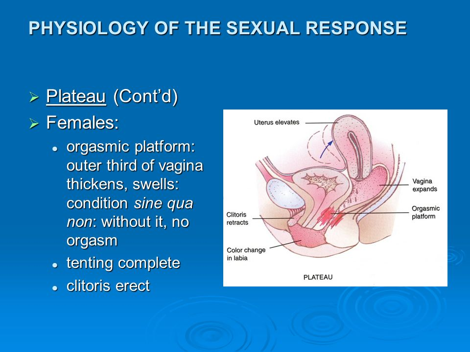 Physiology Sex 21