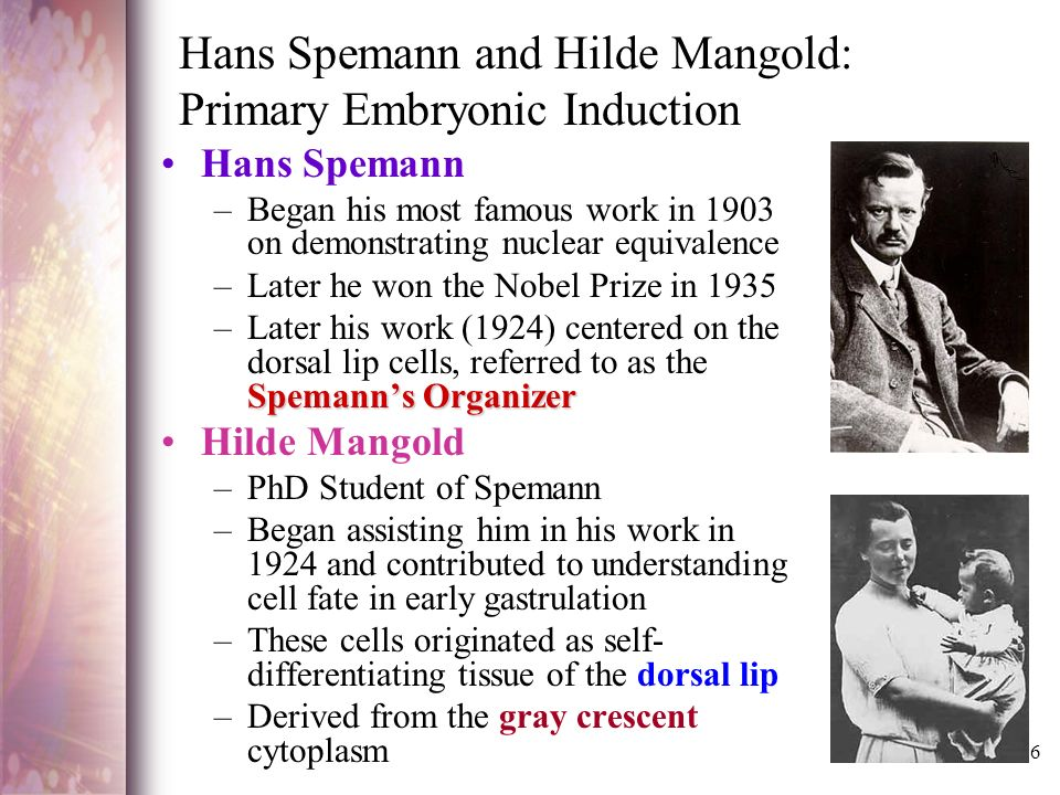 hans spemann and hilde mangold: primary embryonic induction essay Rationalizing early embryogenesis in the 1930s: albert dalcq on gradients and fields.