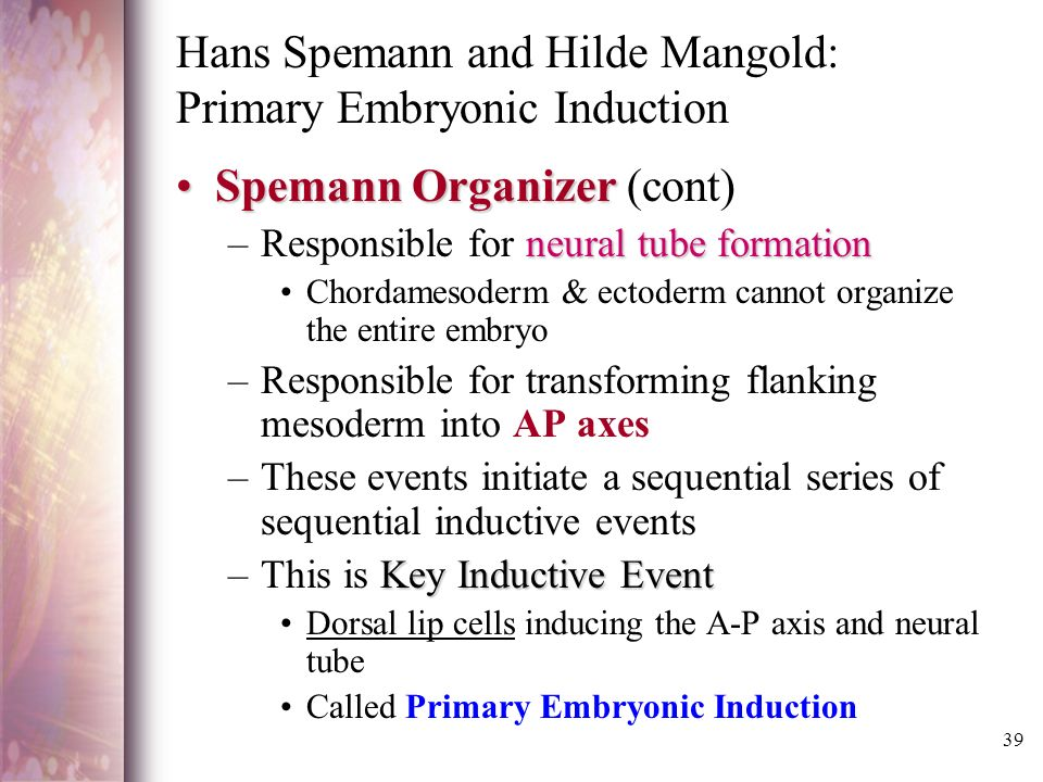 hans spemann and hilde mangold: primary embryonic induction essay Articles essays and theses publications on the ep  hilde mangold was a  phd candidate who conducted the organizer  hans spemann at the university  of freiburg in freiburg, germany the discovery of the spemann-mangold  organizer introduced the concept of induction in embryonic development.