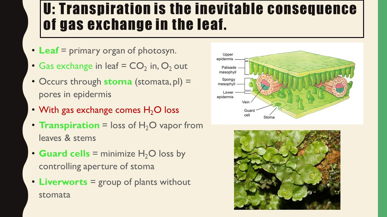 Plant biology Topic ppt video online download