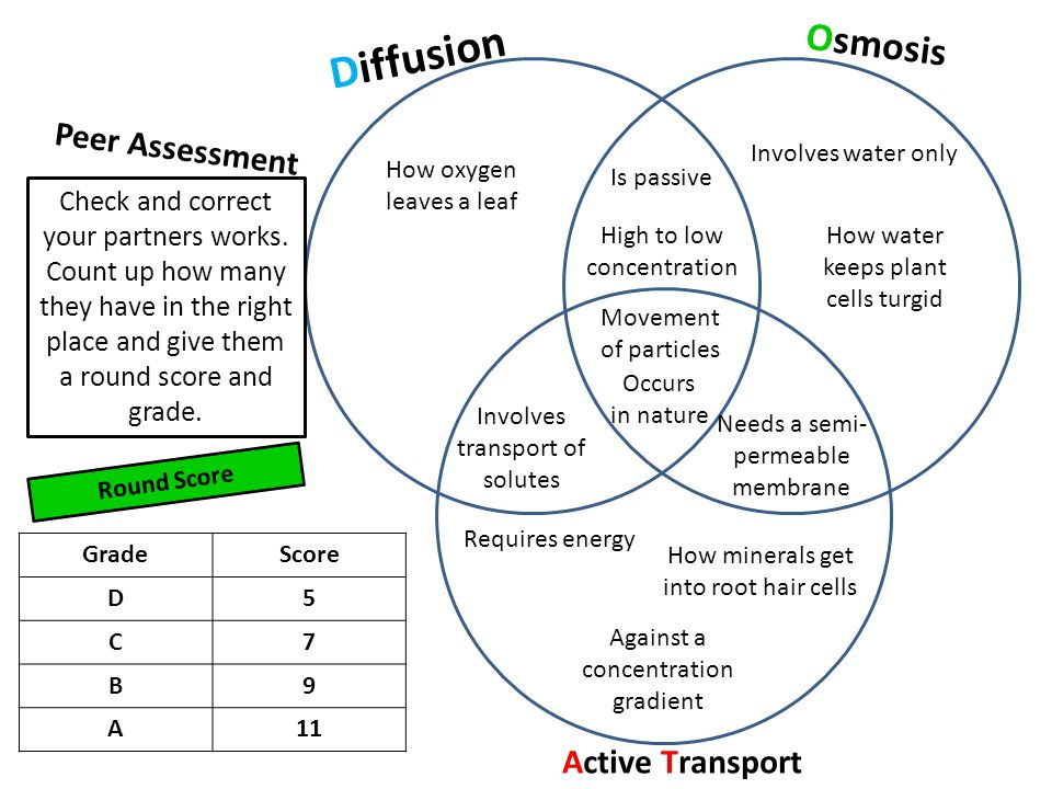 Active Vs Passive Transport Venn Diagram Ukrandiffusion