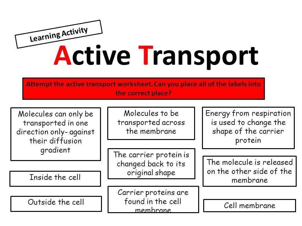Concentration gradient ppt download – Active Transport Worksheet