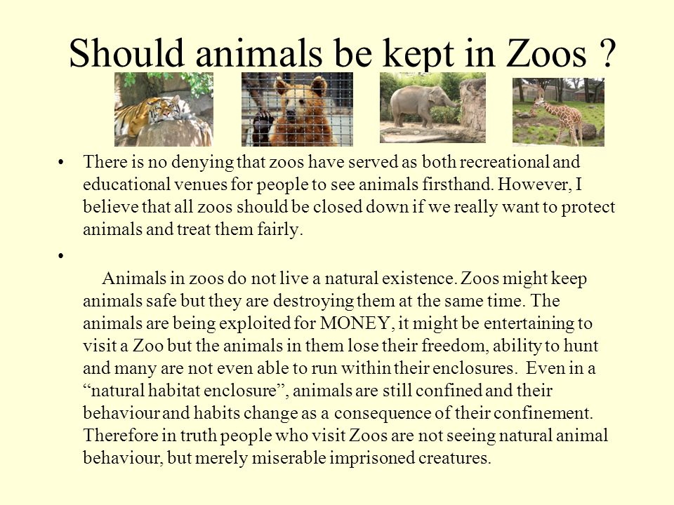 why animals should not be kept in zoos essay They should be kept in zoos for educational purposes individual interaction with exotic animals face-to-face allows an experience that promotes wonder to enter our lives.