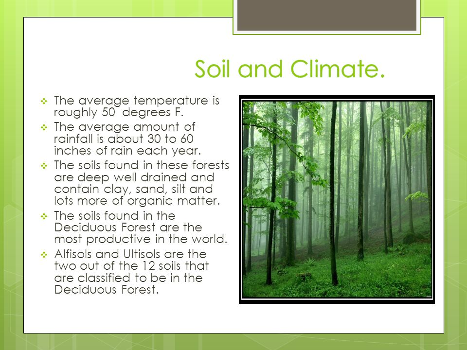 Temperate deciduous forest ppt download for Soil 4 climate