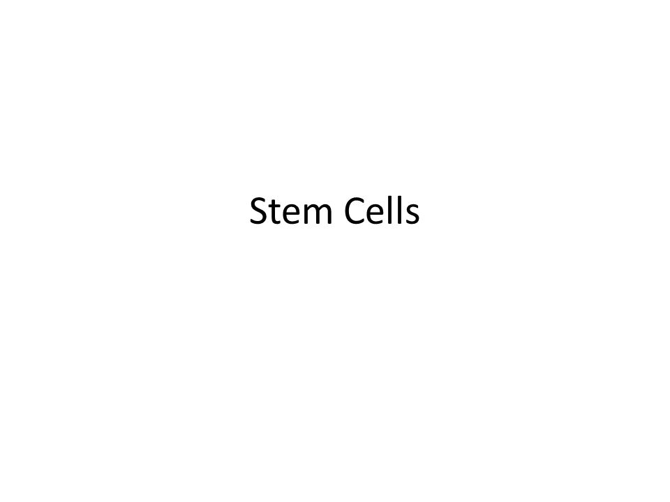 Stem cells ppt video online download 1 stem cells toneelgroepblik Image collections