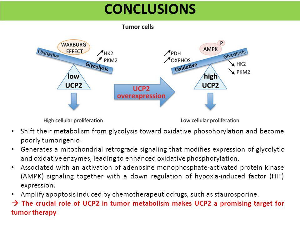Bresenham S Line Drawing Algorithm In Java Applet : Mitochondrial retrograde signaling mediated by ucp