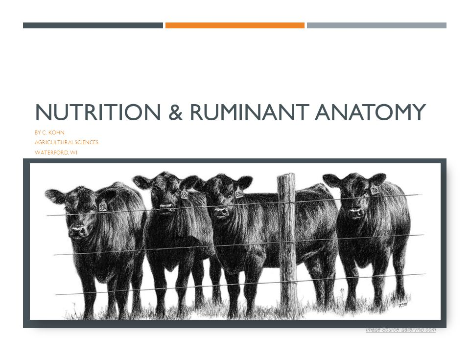 Nutrition & Ruminant Anatomy - ppt video online download