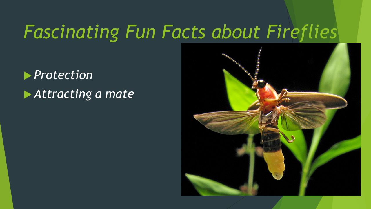 facts internet dating harmful insects