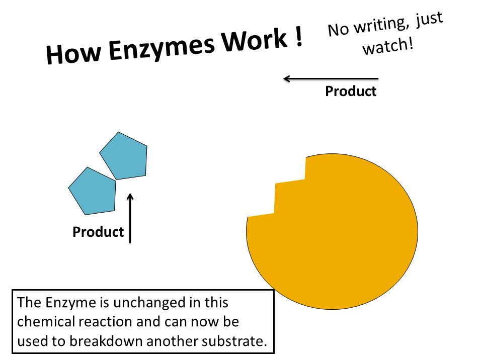 enzymes are biological catalytic essay In a biological system the reaction dynamicss chiefly depends upon the enzymes involved in that reaction  or a catalytic site  essay sample on kinetics in .