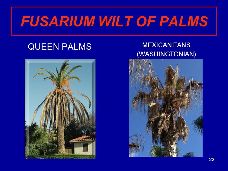Palm Tree Diseases Invading Citrus Villas Ppt Video