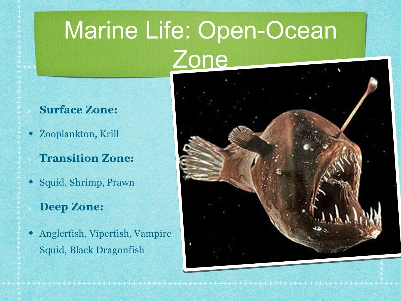 Marine Life: Open-Ocean Zone