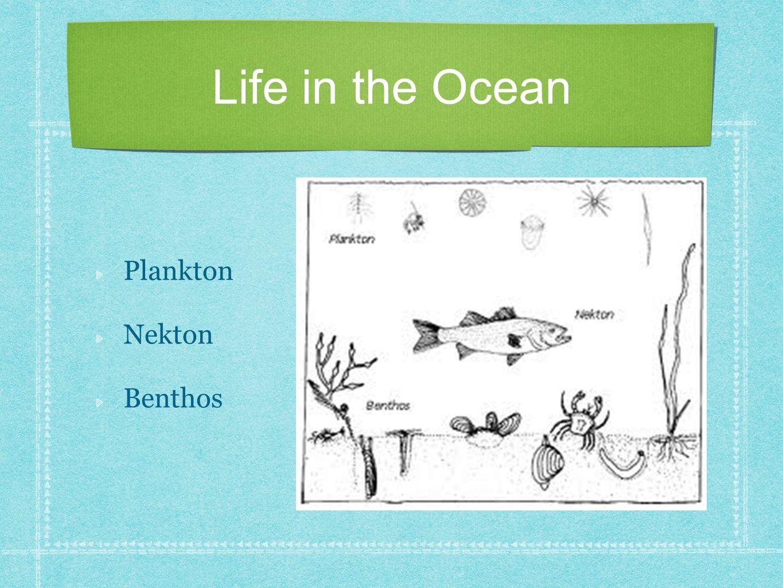 Life in the Ocean Plankton Nekton Benthos