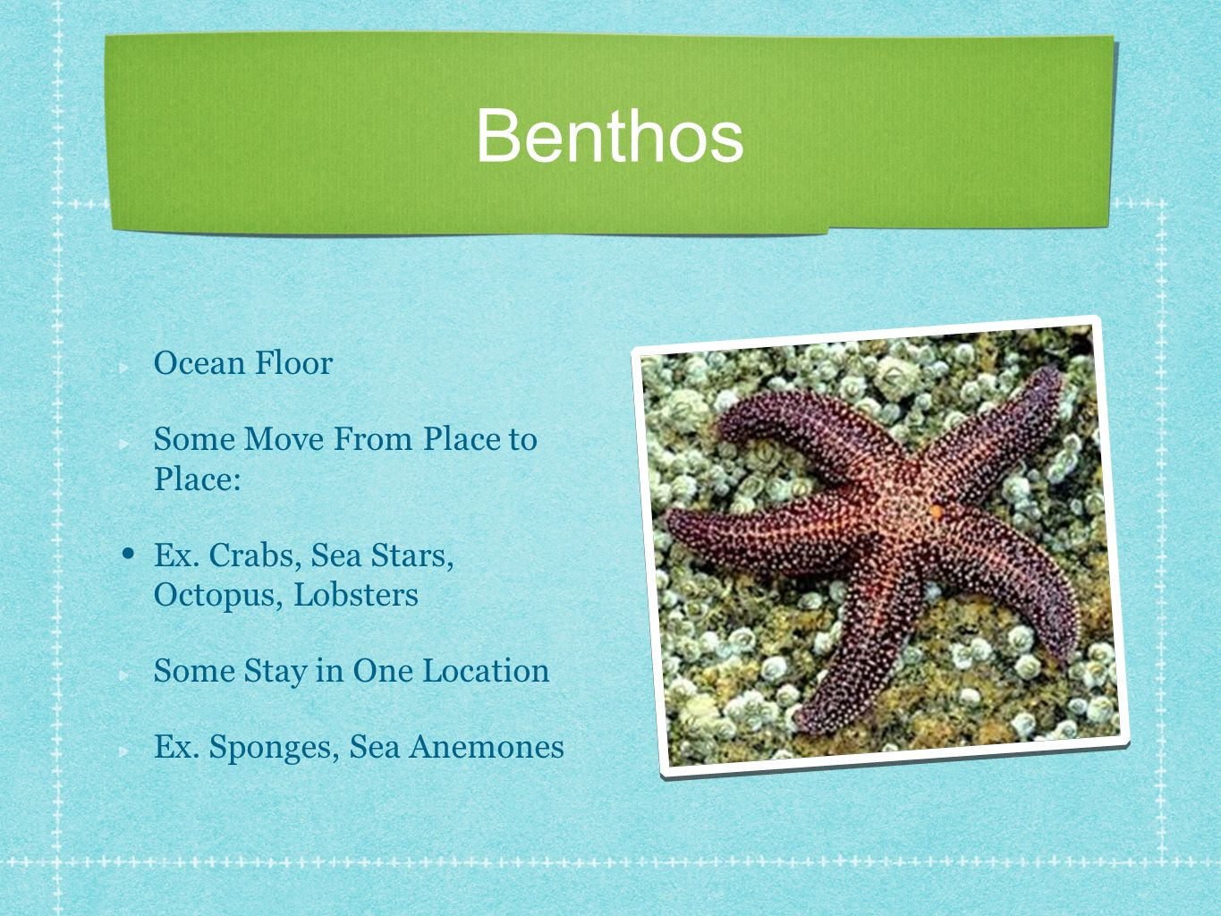 Benthos Ocean Floor Some Move From Place to Place: