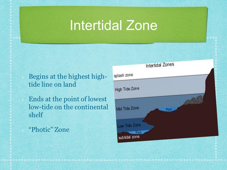Intertidal Zone Begins at the highest high- tide line on land