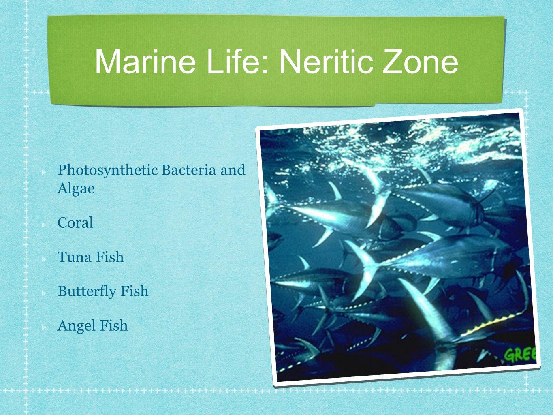Marine Life: Neritic Zone