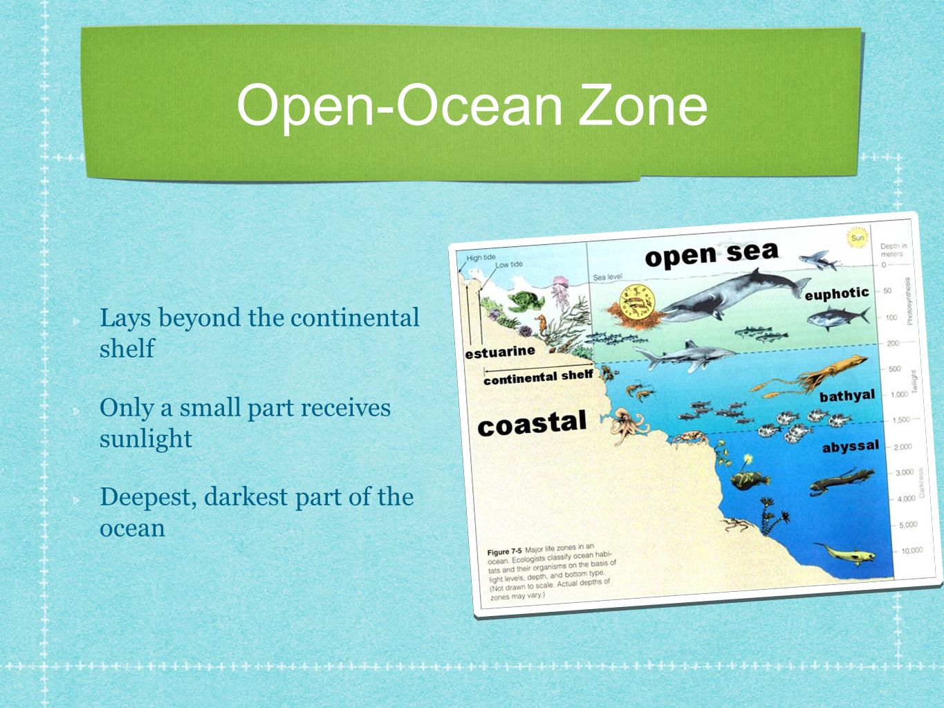 Open-Ocean Zone Lays beyond the continental shelf