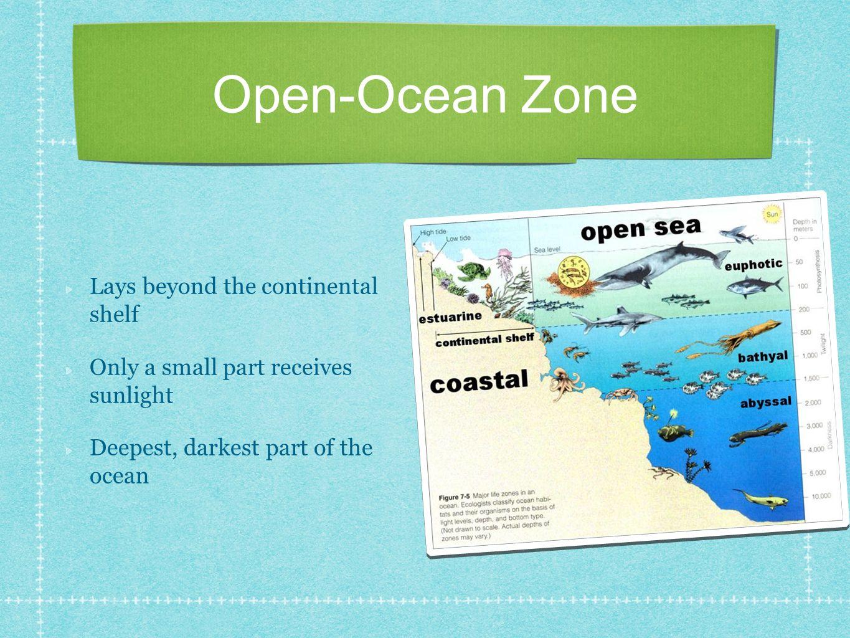 Ocean Habitats. - ppt download