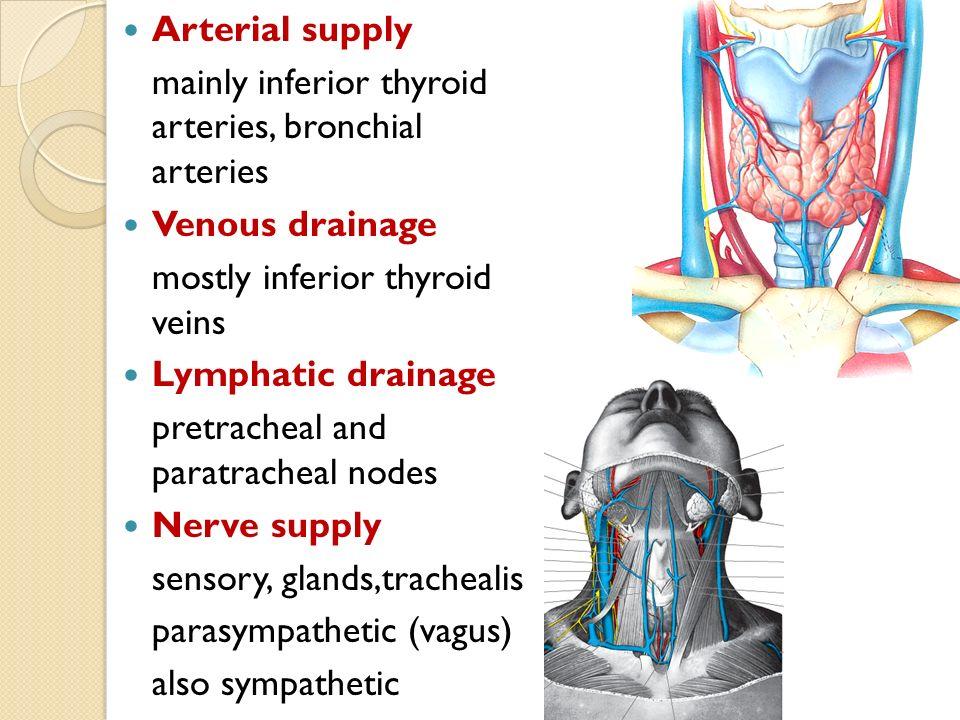 Bronchial vein drainage
