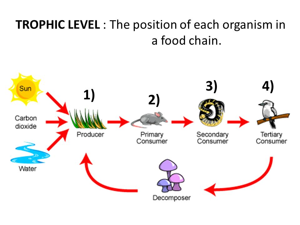 4 levels of organization - ppt video online download diagram a simple food chain and label each trophic level nissan fuse box diagram and label