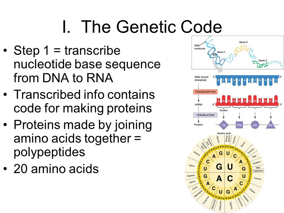 bases in protein sequence