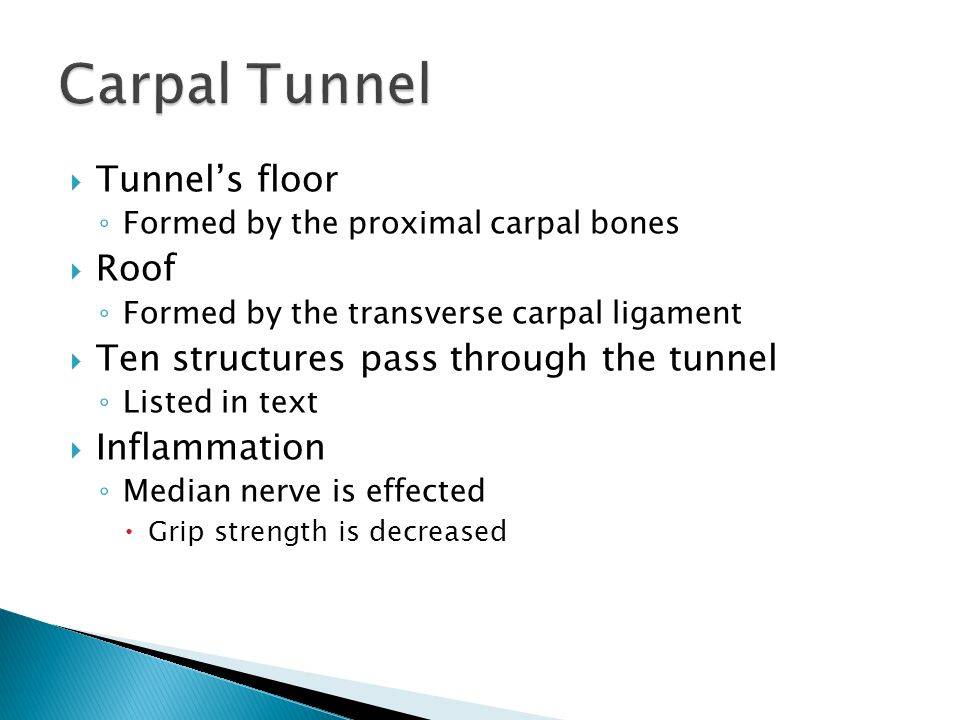 Carpal Tunnel Roof And Floor Wrist Hand And Finger