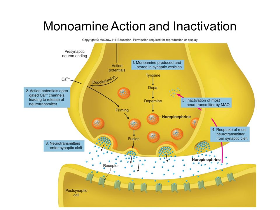 depression and monoamine neurotransmitters The aetiology of depression was long thought to hinge on the monoamine hypothesis which supposes the condition is caused by absolute or functional deficiencies in monoamine neurotransmitters, particularly serotonin and noradrenaline (bear et al 2001:687.