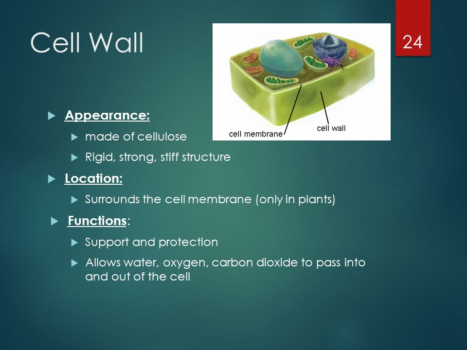 organelles of the cell ppt video online download